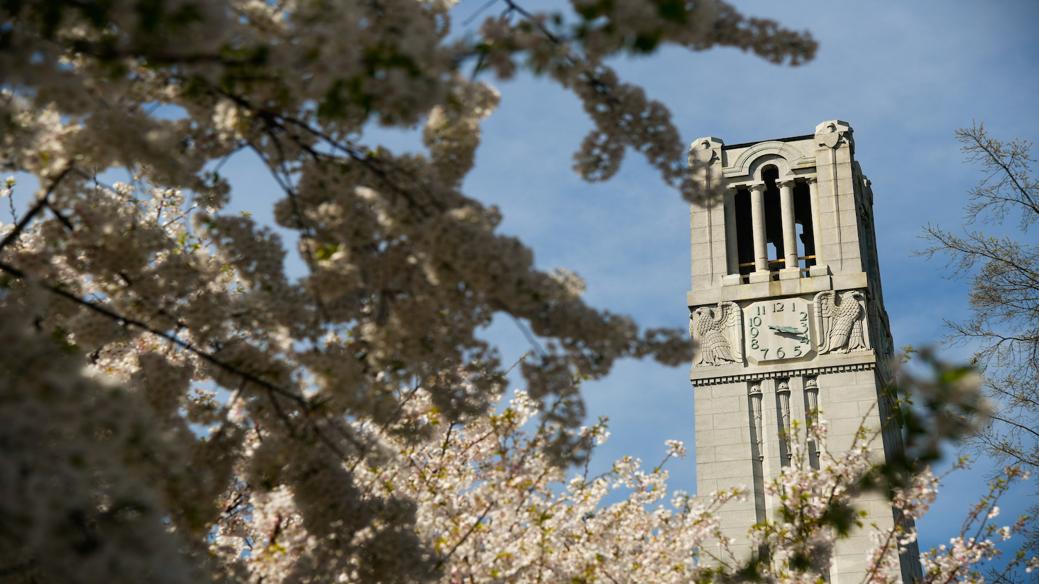 The Belltower framed by blooming trees in Spring.