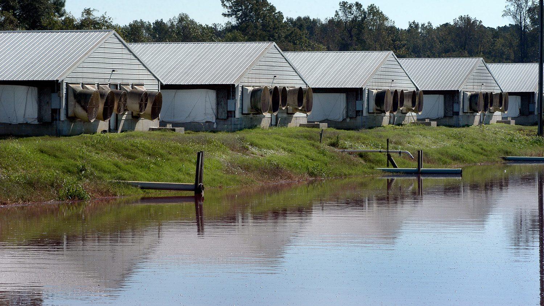 Waste lagoon and hog houses on a farm outside of Kinston.