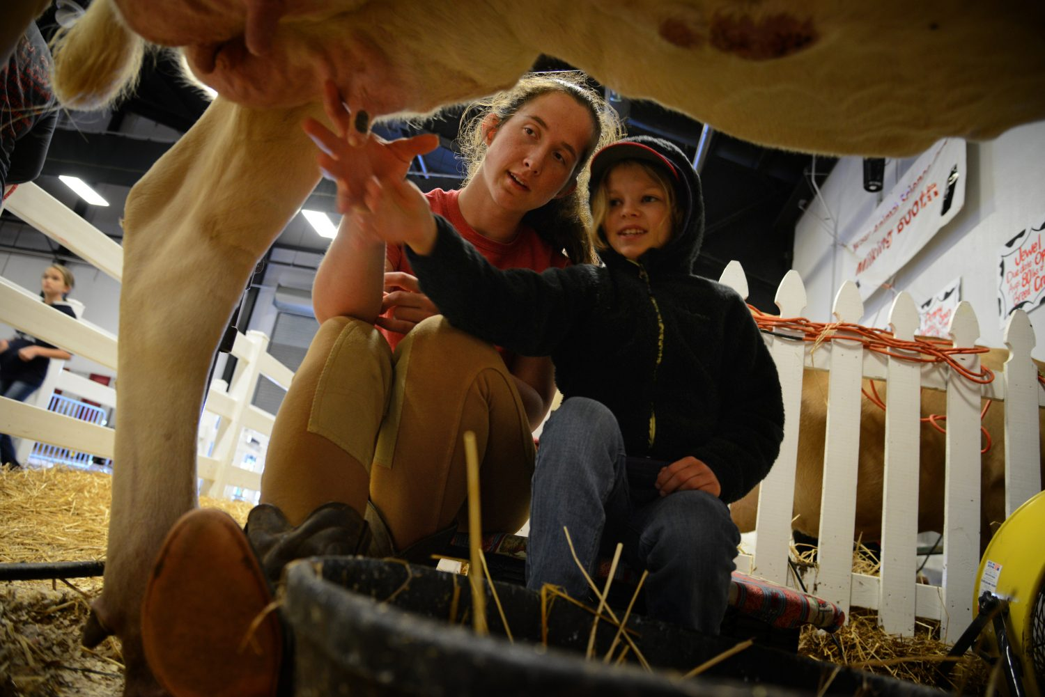Student with child milking a cow