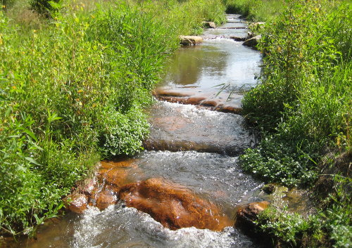 stream through field