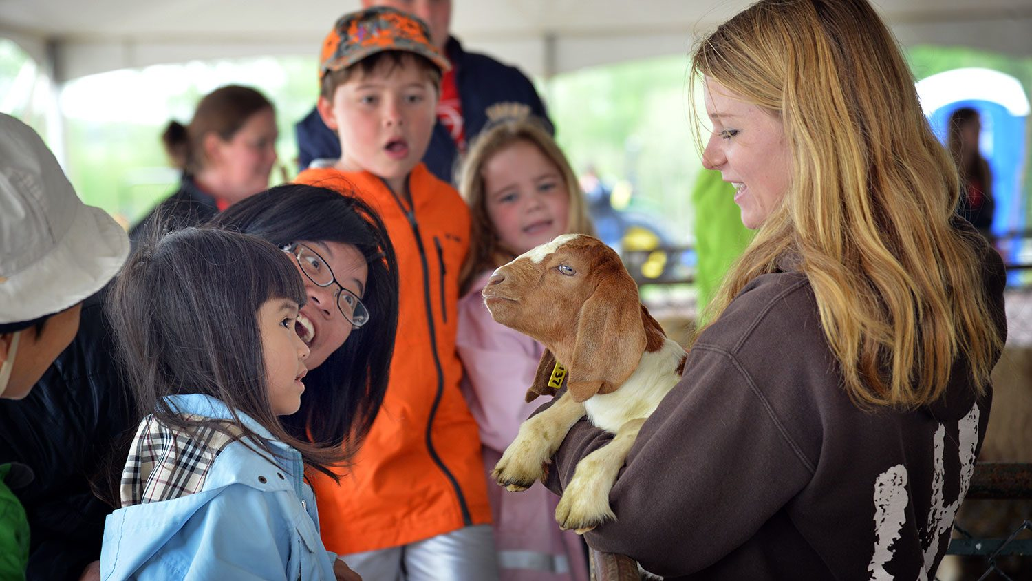 Scene from Farm Animal Days