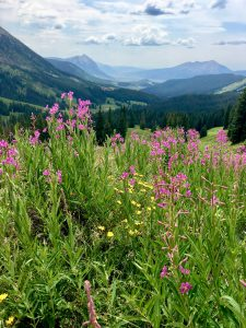 Wildflowers cloud the foreground and a vast mountain landscape fills the background of the image.