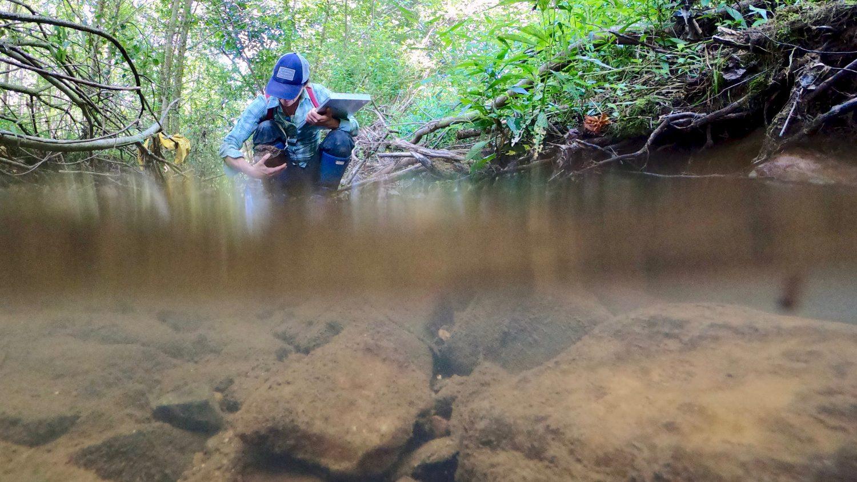 Aquatic research on invertebrate presence in freshwater streams