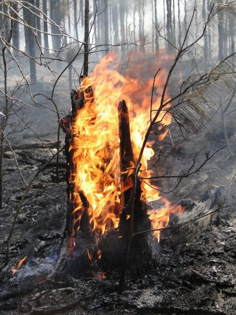 log on fire during a prescribed burn