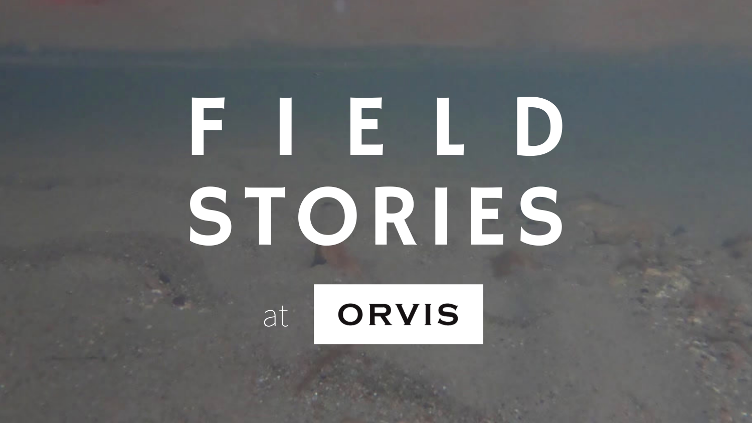 fish stories at orvis