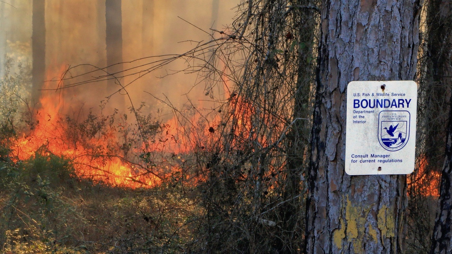 prescribed burn, St. Marks National Wildlife Refuge, Panacea Unit, Wakulla County, Florida 1