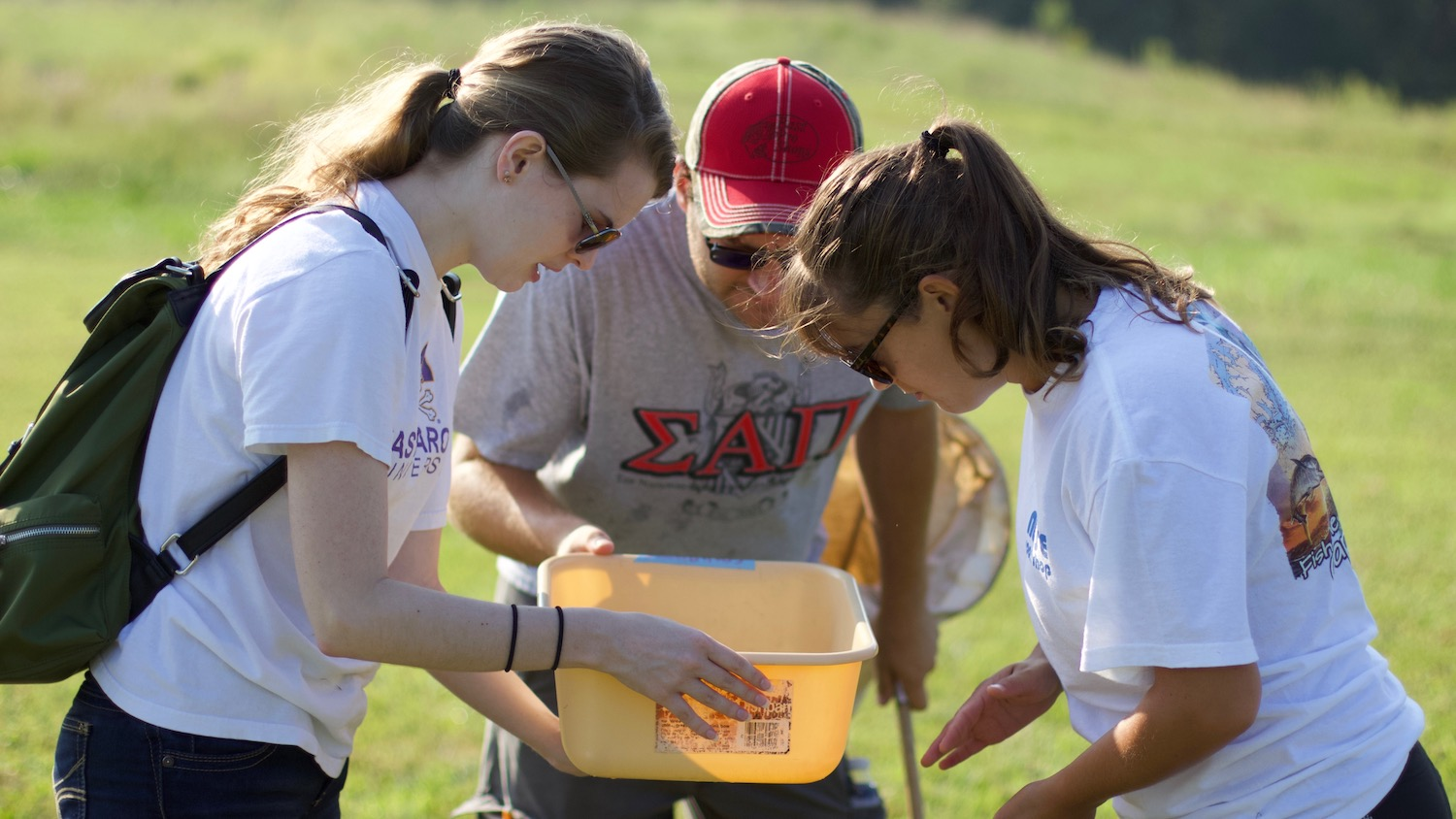 Three applied ecology students look into a insect bin to see what they collected in their sweep nets.