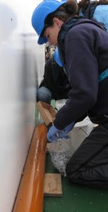 Karen Lloyd working to take samples from a just-extracted sediment core. Image courtesy of Karen Lloyd.