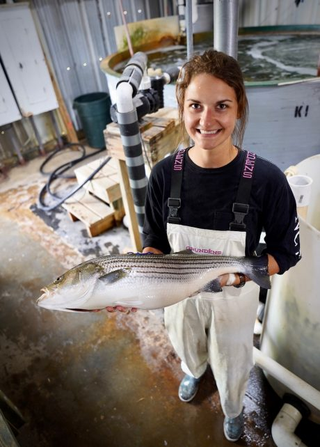 Linnea Andersen holding a striped bass in an aquaculture facility