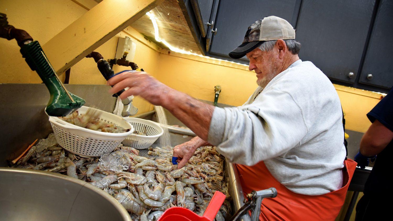 fisherman processing shrimp