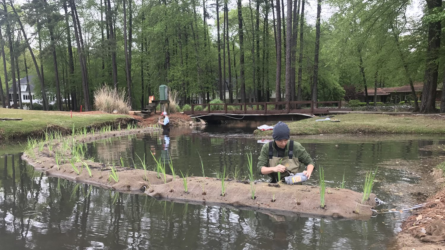 Two students working in a water body (lake or pond), where they are building floating wetlands.