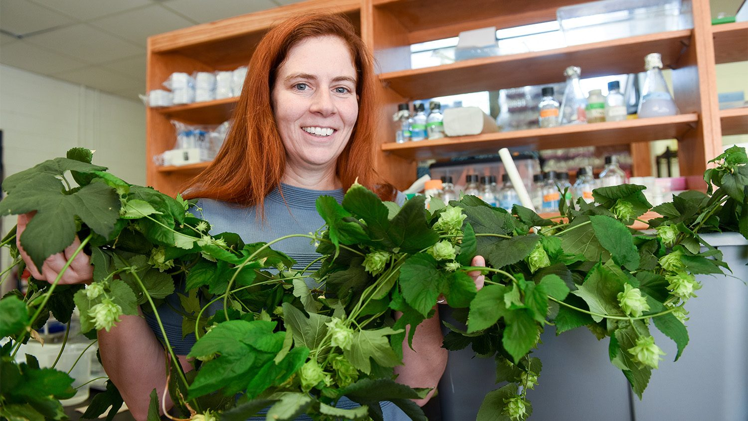 NC State's Dr. Colleen Doherty studies the circadian rhythm of plants. Among the projects she's involved with: finding ways to make hops plants more suitable for North Carolina day length.