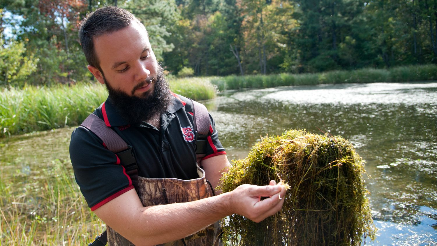 Conservationist with Hydrilla