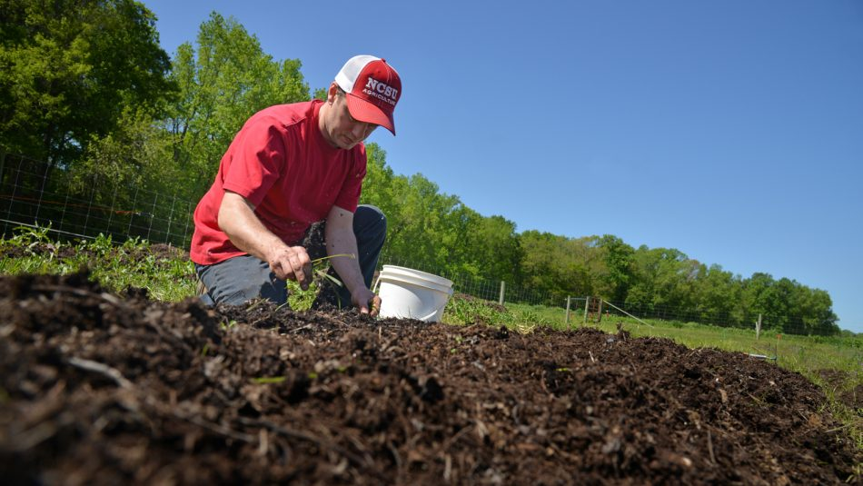 Farmer in field checking soil