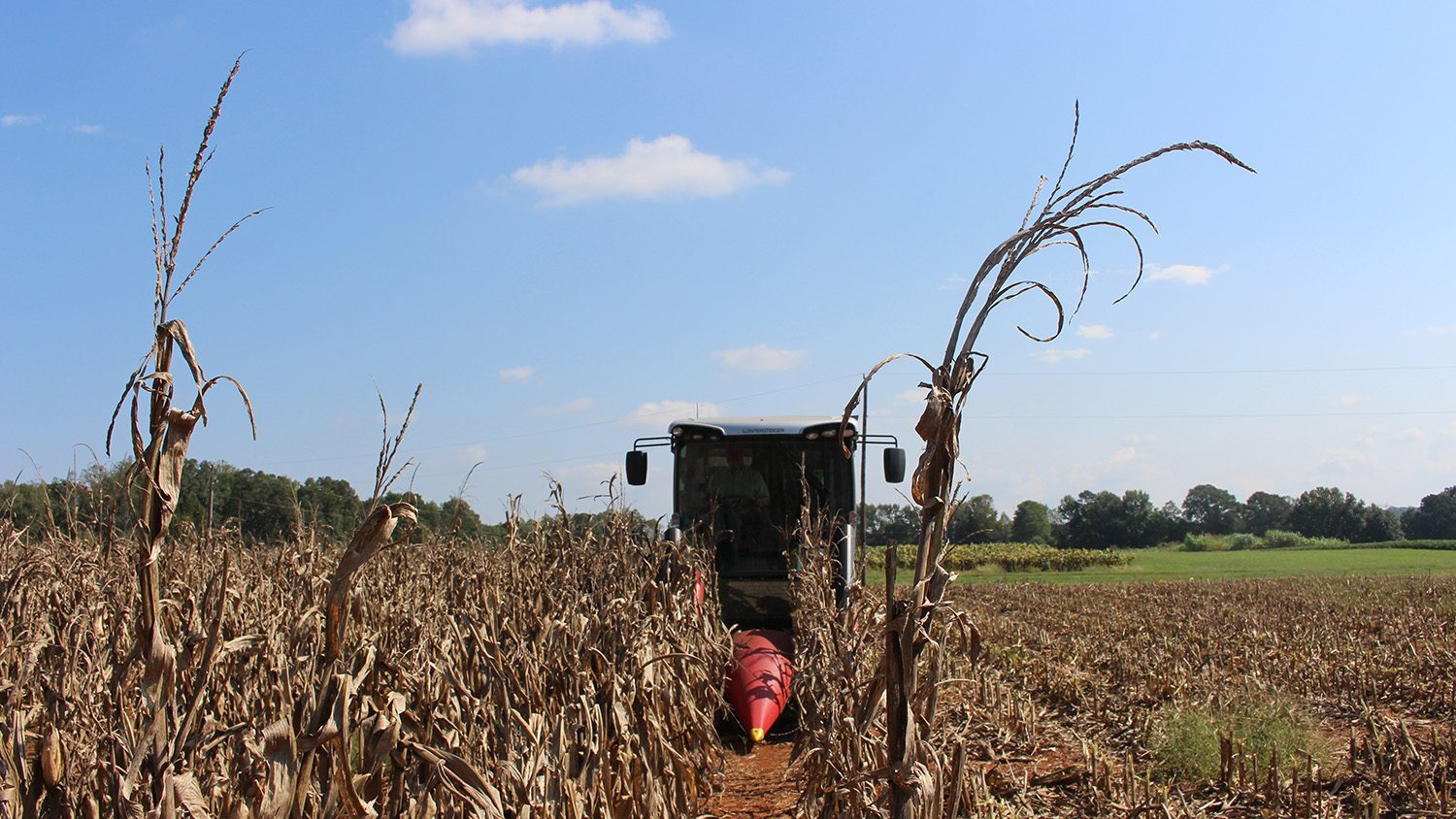 Small combine harvesting corn