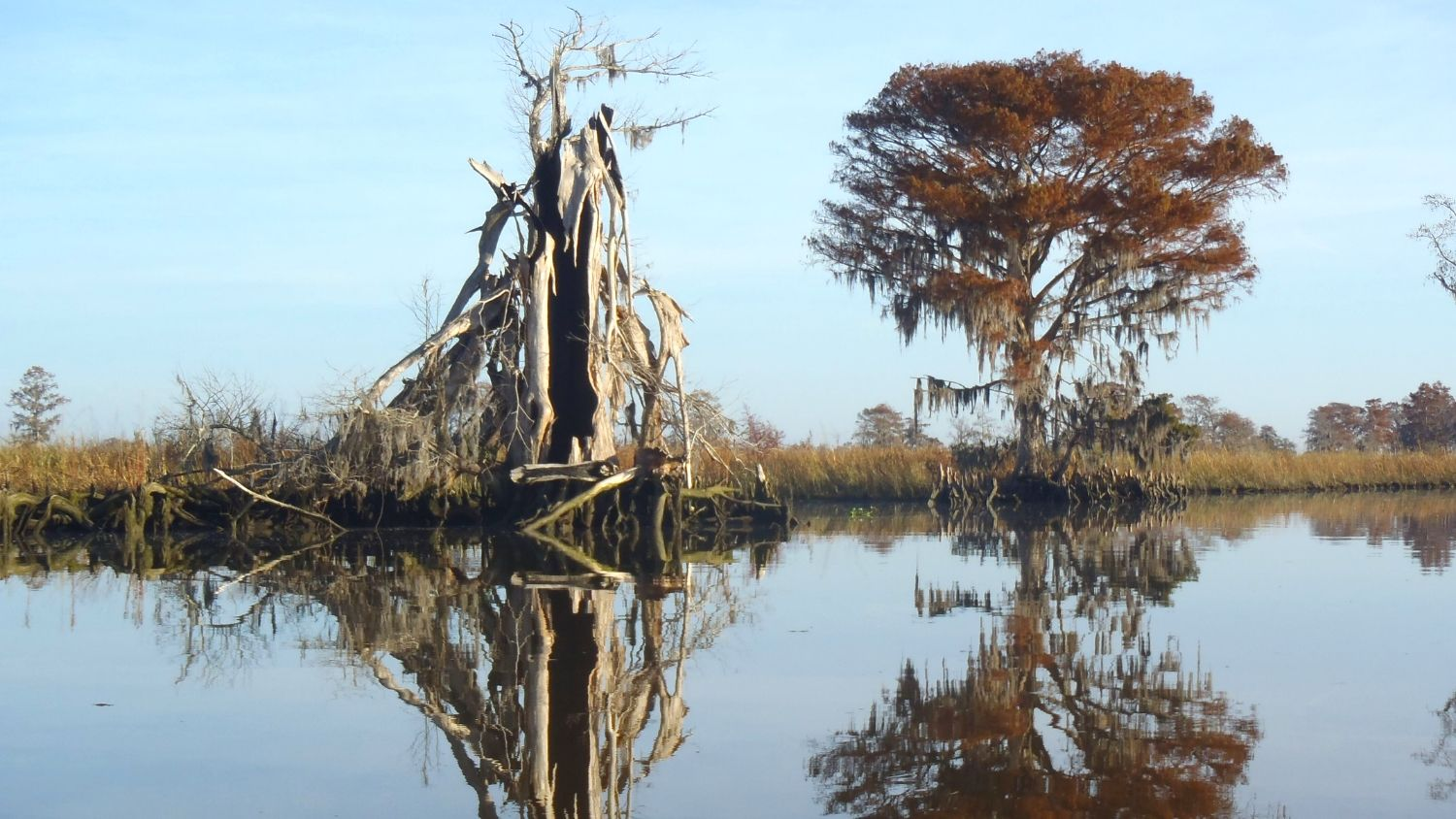 Ghost forests develop as species die-off from soil salinity