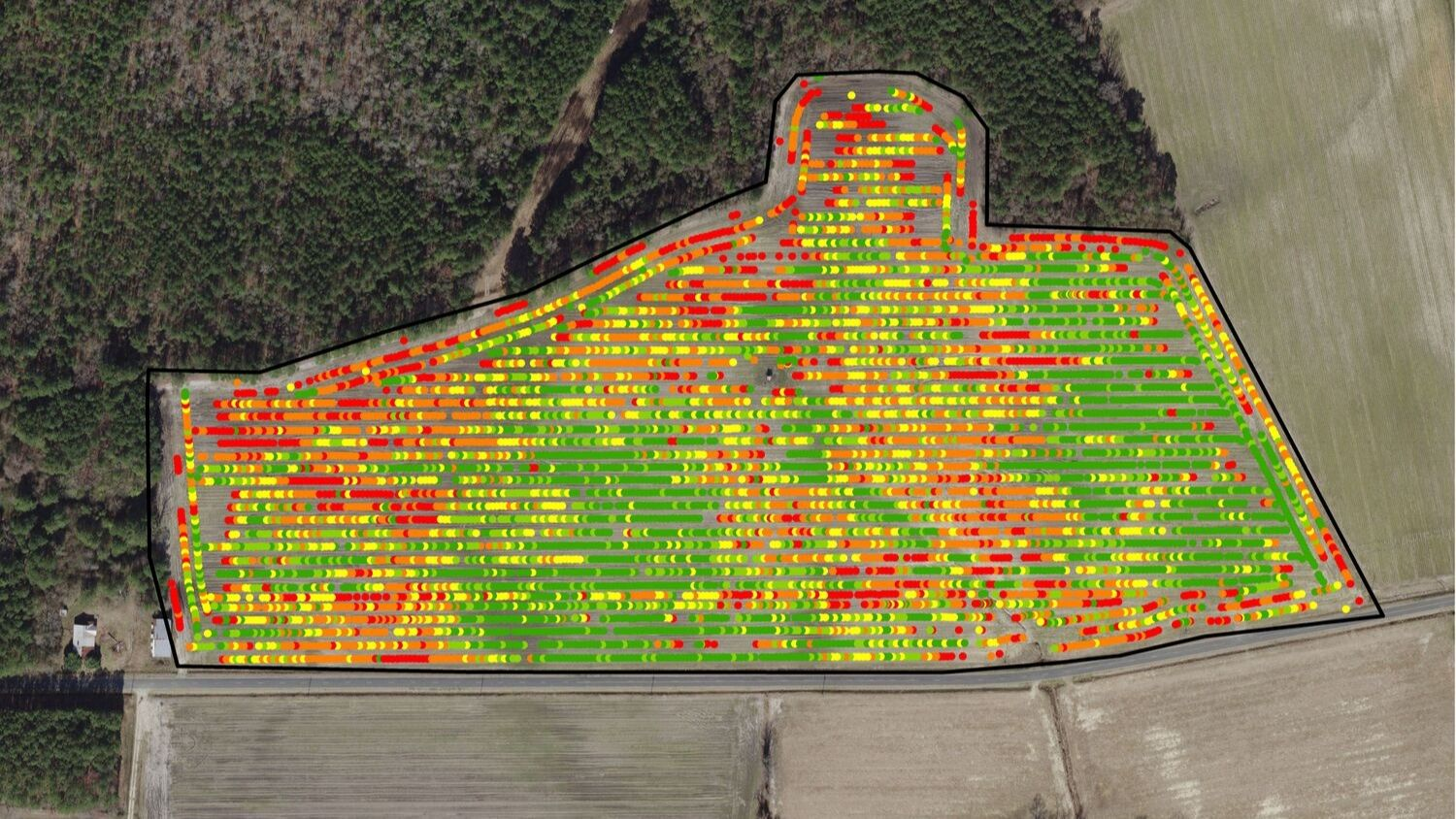 Precision agriculture field map of corn yield