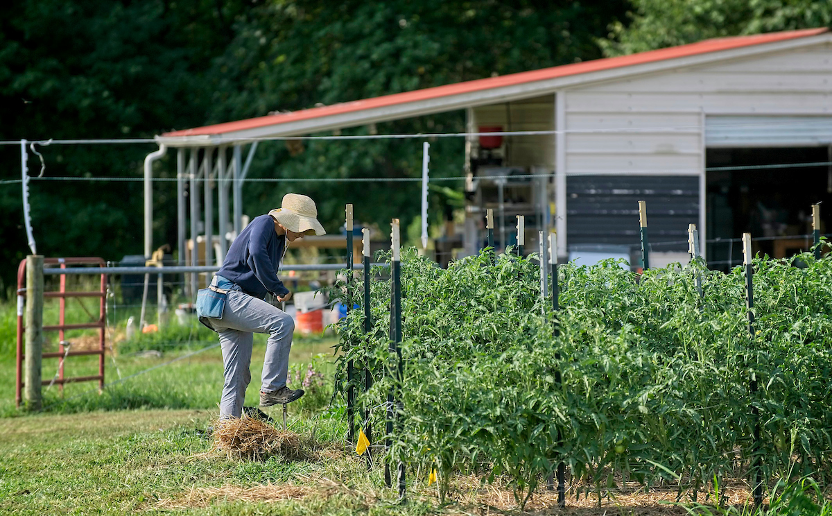 NC State Agroecology Education Farm gets a new neighbor