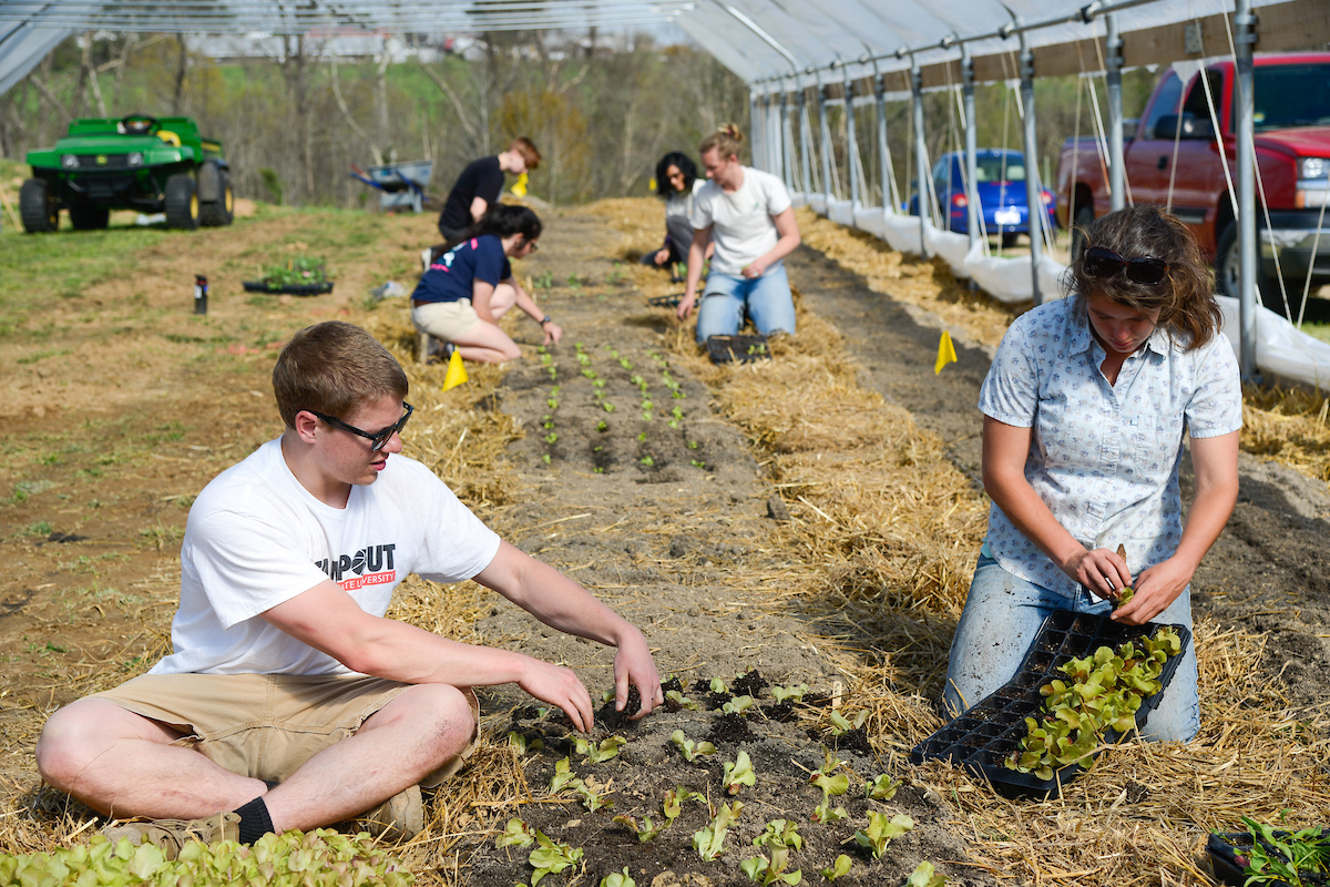 Student groups from many departments and schools use the NC State teaching gardens