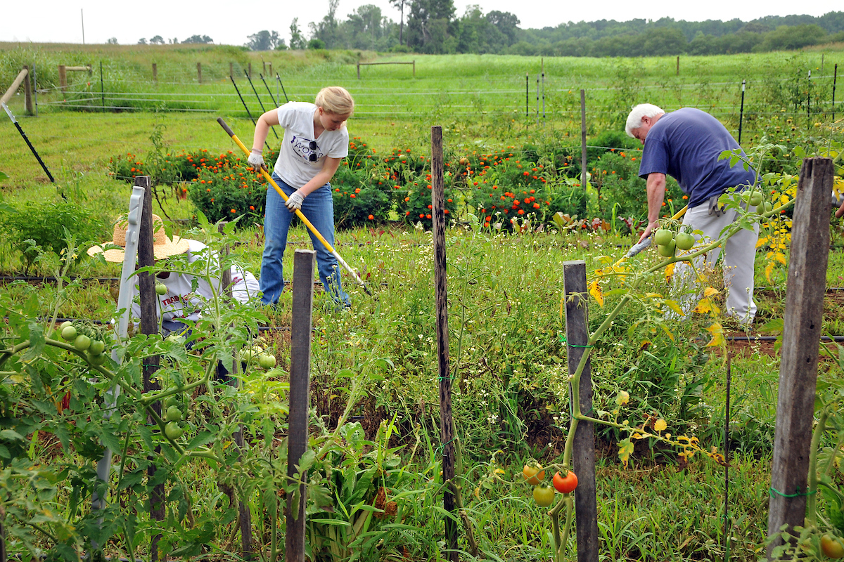 NC State Agroecology farm workdays draw volunteers from all walks of life