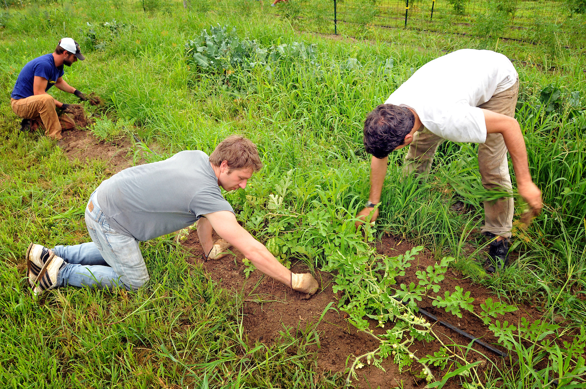 NC State teaching gardens allow students to interact with classroom knowledge