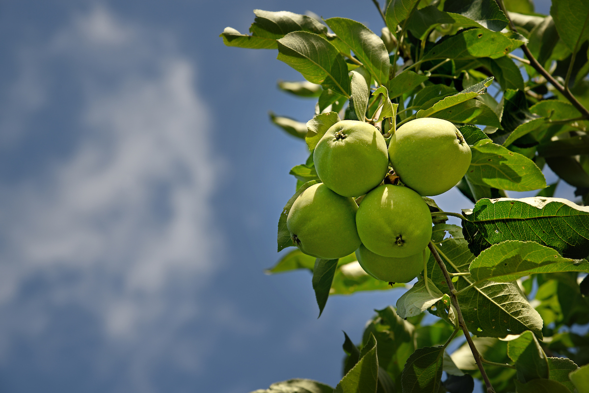 Agroecology students hope to grow apples in new fruit orchard