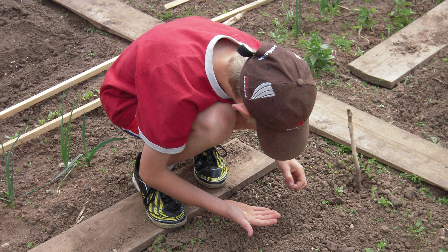 boy in red shirt planting vegetable seeds in the ground
