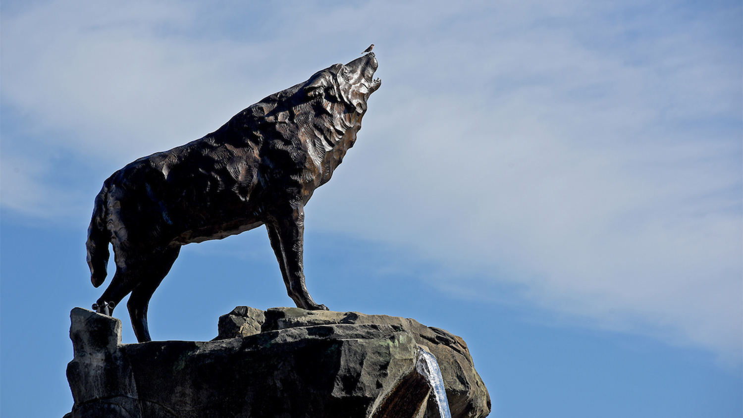 A bronze wolf statue sits atop a rock