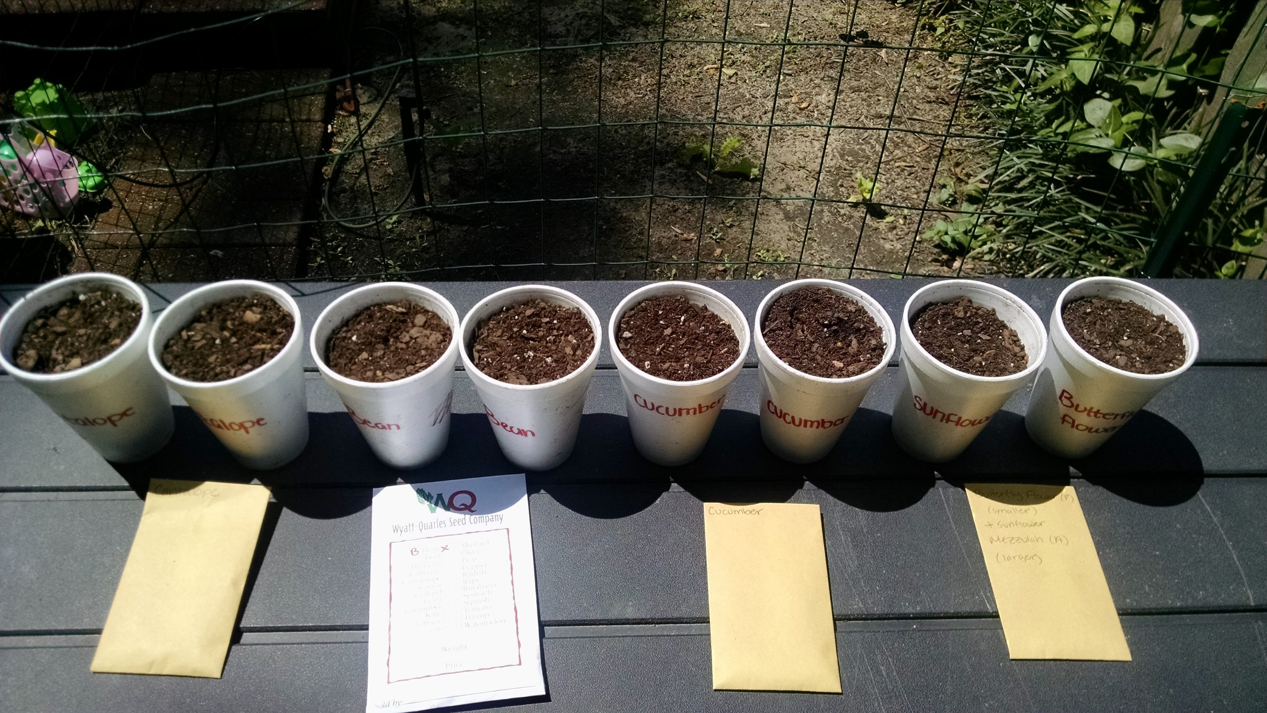 A line of Cups with soil and seeds