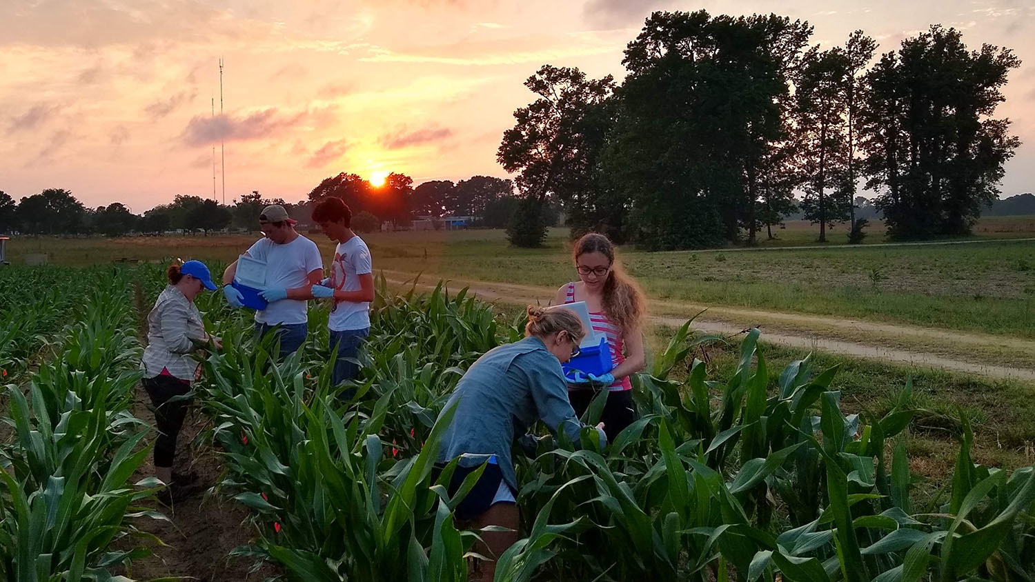 A group of students in a corn field as the sun sets. (From Summer 2019)