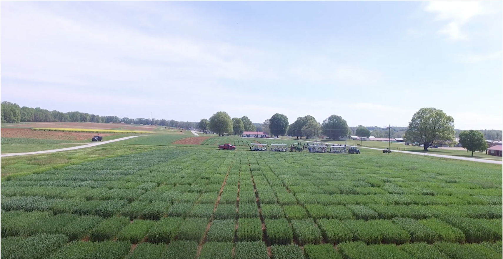 aerial view of wheat test plots