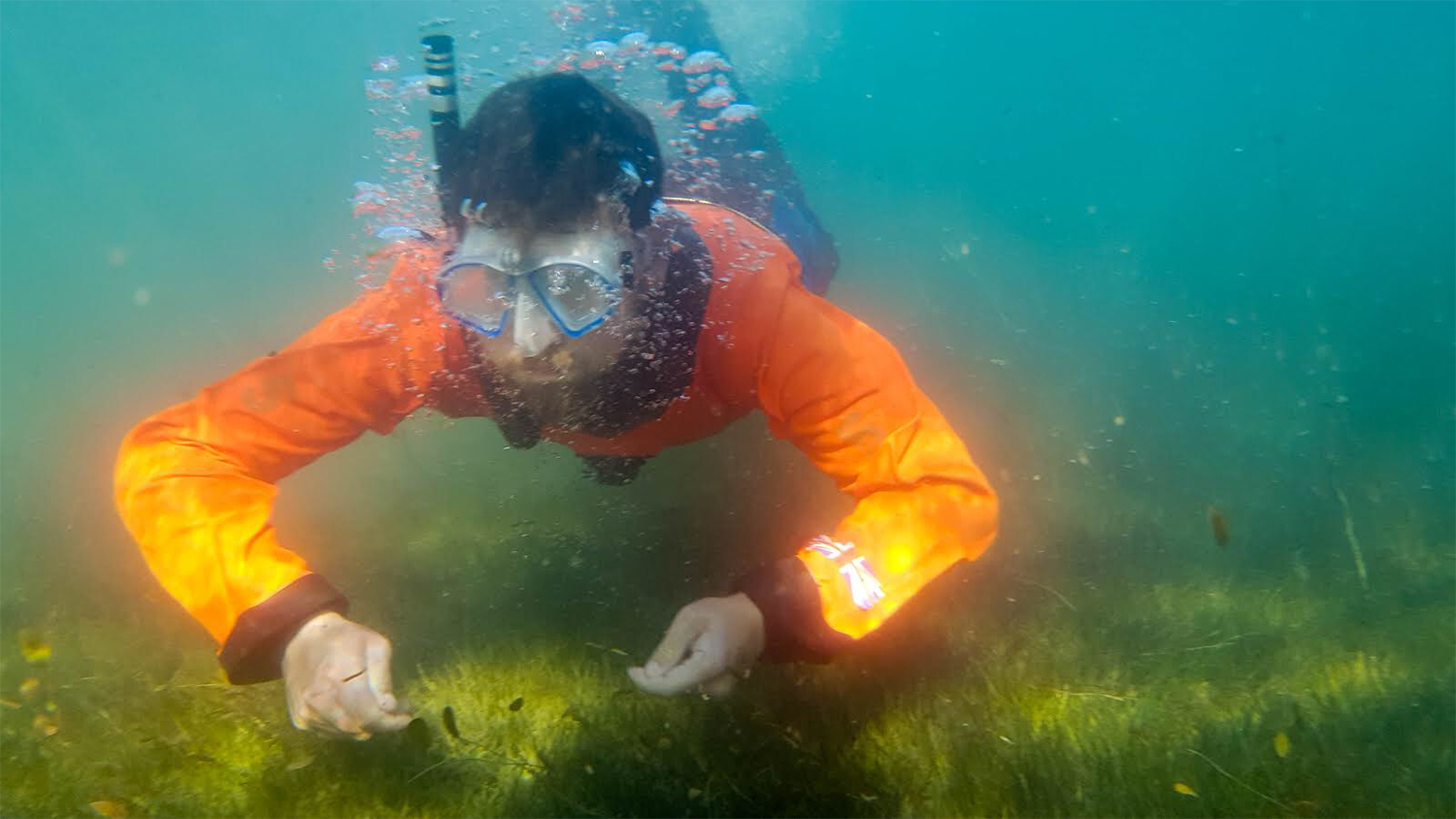 diver in orange shirt collects weed samples