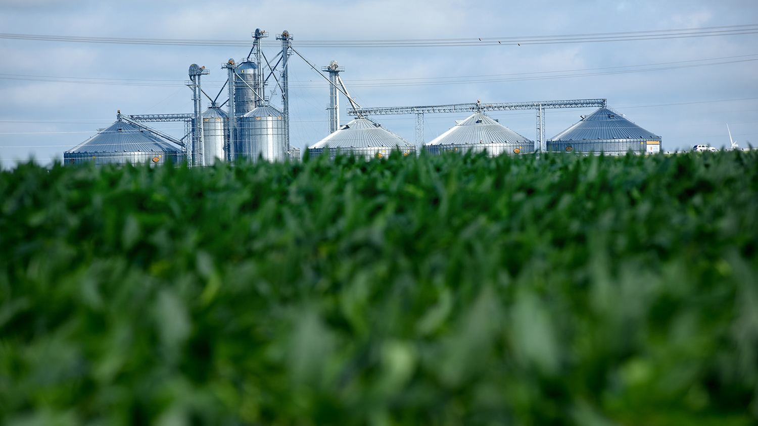 Grain silos rise up behind soybean fields on a farm in Pasquotank County.