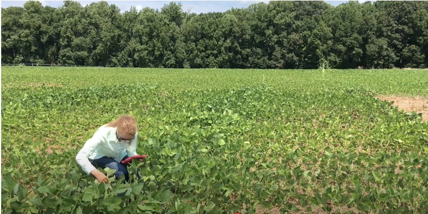 Woman kneeling in a field of soybeans