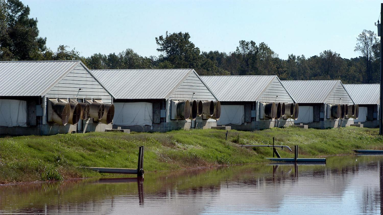 hog barns and waste lagoon
