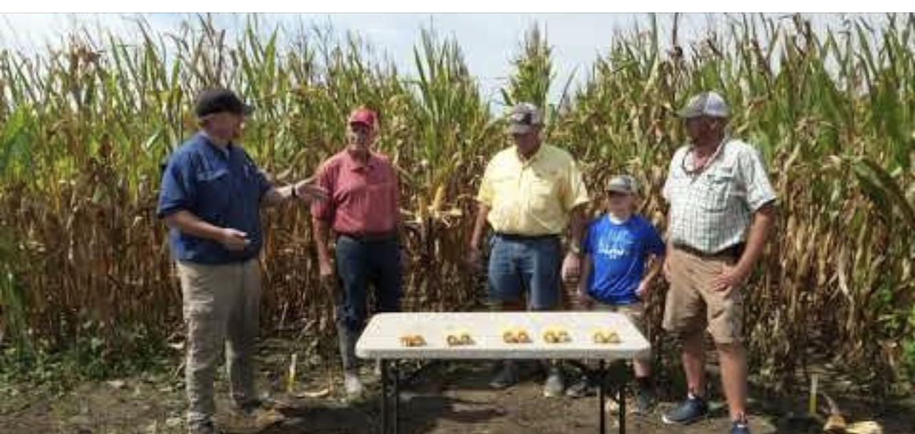 Four men discuss corn varieties in a corn field