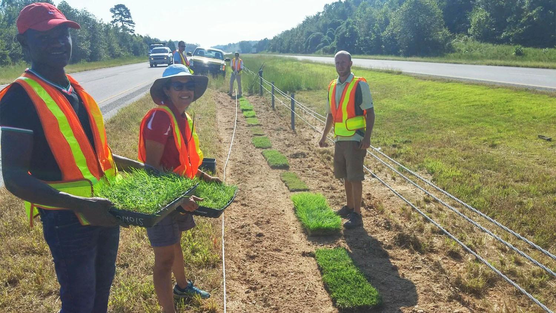 Researchers installing roadside sod samples
