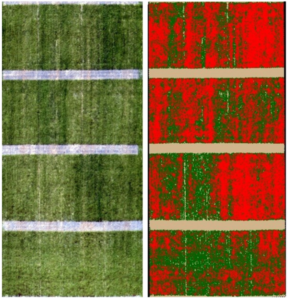 drone imagery of weeds in wheat