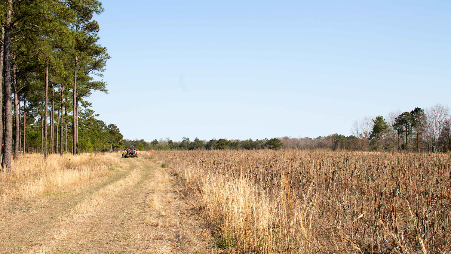 A tractor drives between a corn field and wooded area
