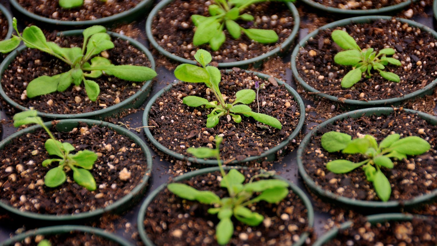 Seven seedlings in containers