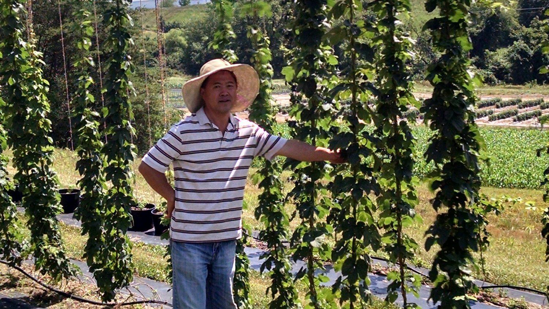 Luping Qu stands beside a hops trellis.