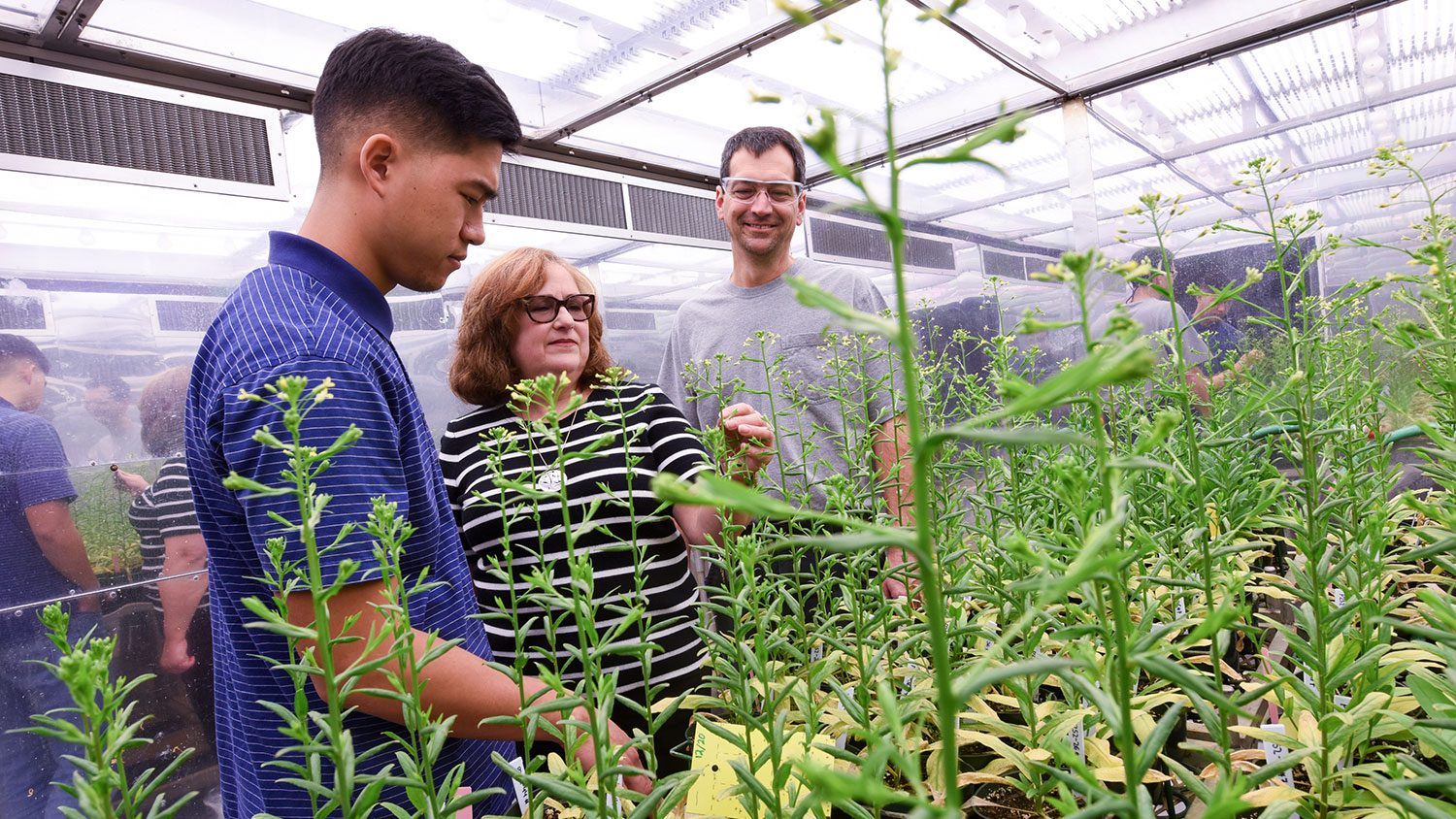 Three people examine plants in a large, lighted chamber.