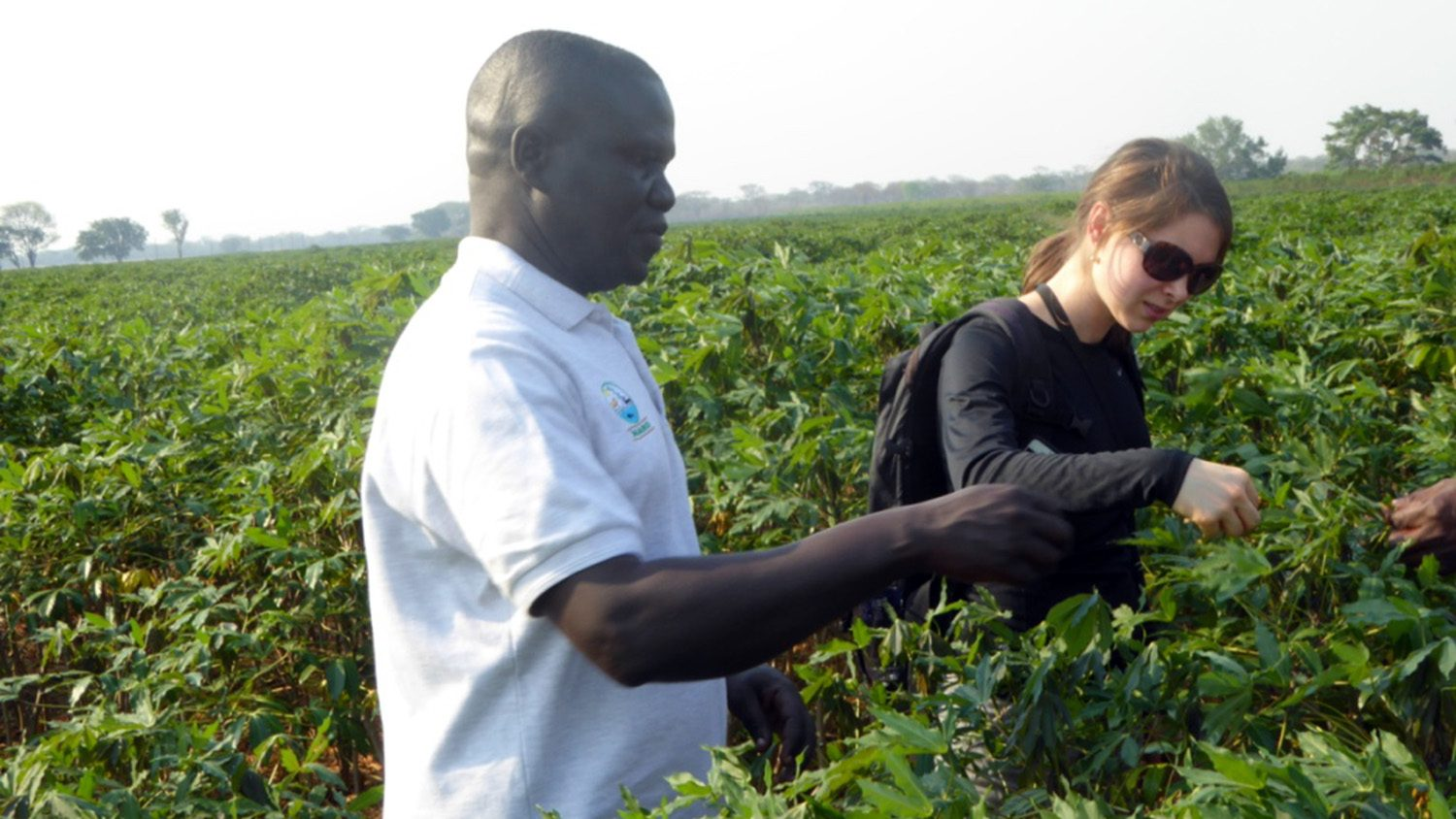 2016 photo of Catherine Doyle (right), learning cassava mosaic disease field diagnosis and whitefly collection methods in Zambia. The man in the foreground is Titus Alicia, a research scientist from the National Crops Resources Research Institute of Uganda. Photo credit: Linda Hanley-Bowdoin.