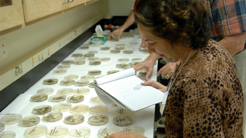 Phd thesis plant pathology