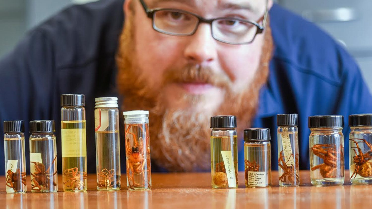 Photo of Matt Bertone, Extension Associate in Entomology