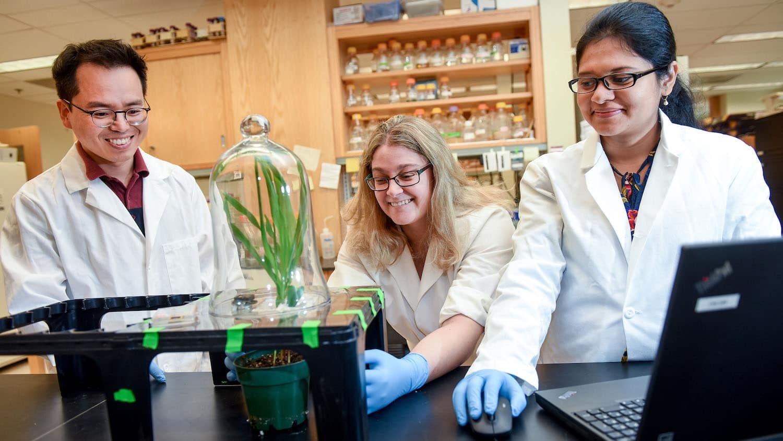 Plant Sensors Research