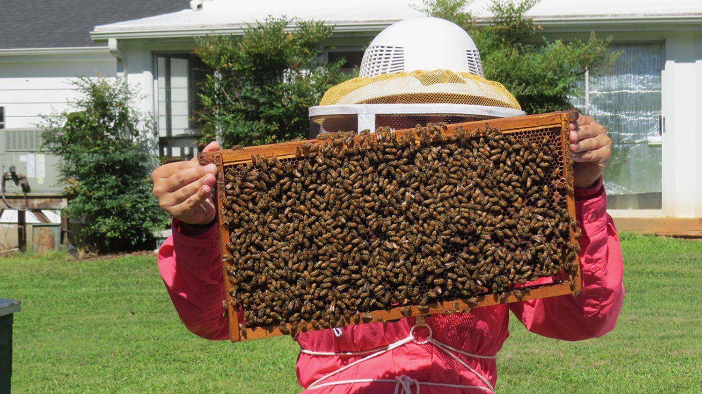 apiculture trip - showing bee frame (C. Sorenson - NCSU)