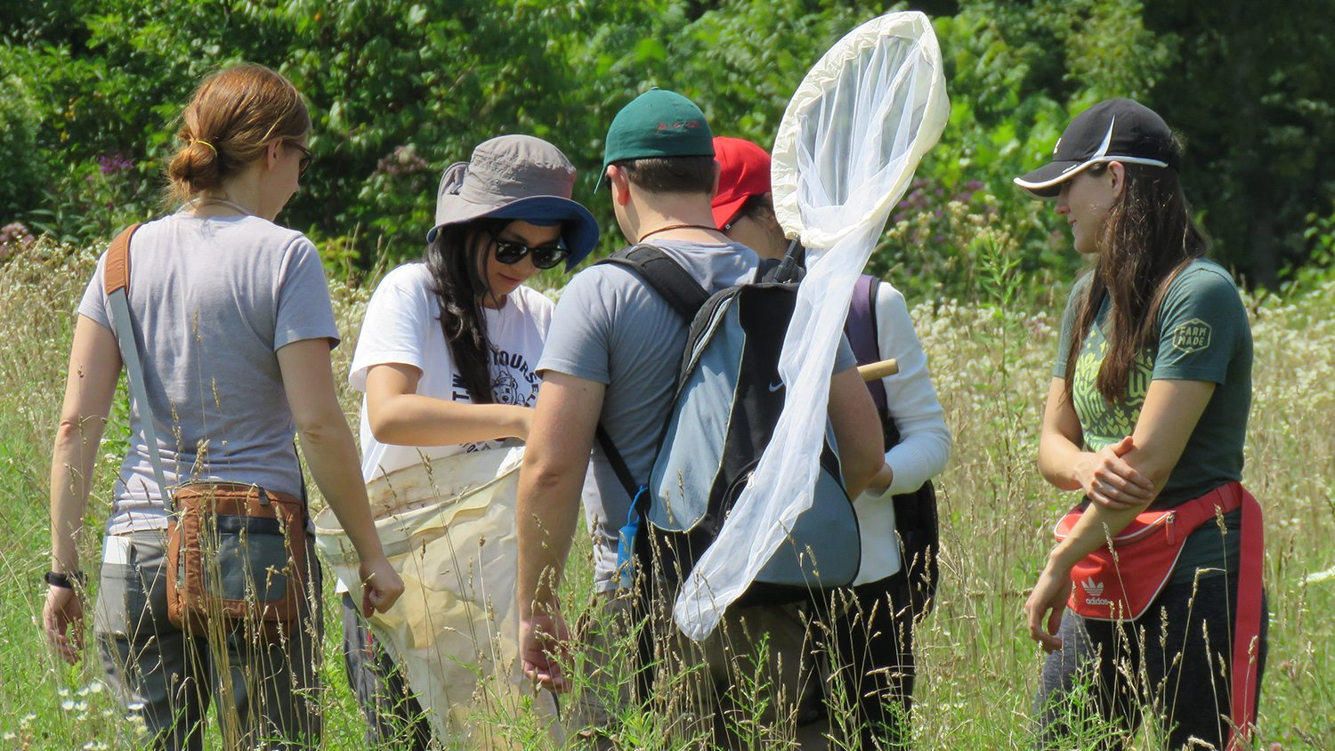 students using sweep nets to collect insects in field (C. Sorenson - NCSU)
