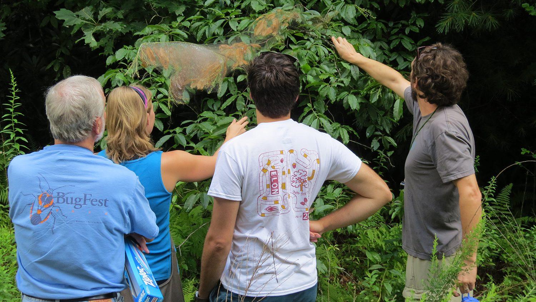 Natural history class examining fall webworms