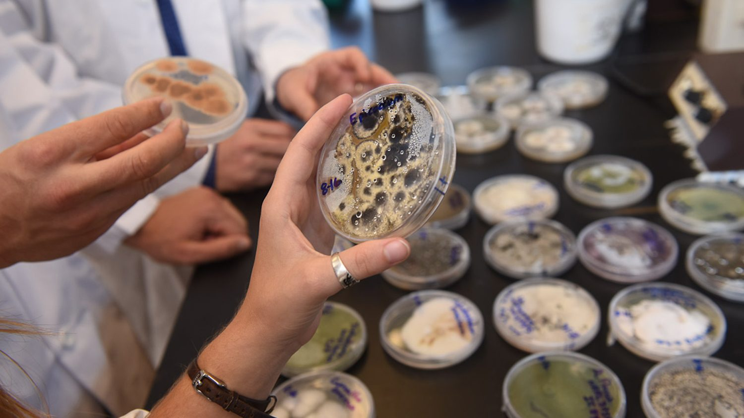 Scientists holding microbe cultures.
